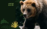 Let's Celebrate World Animal Day and Help the Animals Together!
